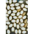 mačkané korálky ve velikosti 17/16mm alabastr  bal. 12 ks